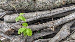 De besnoeiing van boomtakken en gericht stock foto's