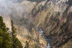 De besnoeiingen van de Yellowstonerivier door canion stock afbeelding