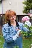 De besnoeiingsrozen van vrouwen in tuin Royalty-vrije Stock Foto