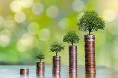 De Besparingsgeld van de geldgroei Het hogere getoonde concept van boommuntstukken het kweken van zaken royalty-vrije stock foto's