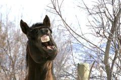 De bespreking van het paard, die een punt benadrukt Stock Foto
