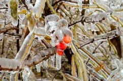 De bessen encrusted in ijs na het freesing van regen Stock Foto