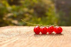 De bessen van de rode aalbes Stock Foto