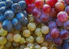 De bessen van de wijnstok stock foto's