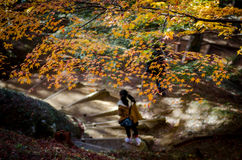 De beste herfst in Japan Stock Foto's