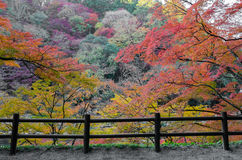 De beste herfst in Japan stock afbeelding