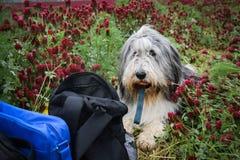 De beste vriend voor het reizen is hond! royalty-vrije stock foto