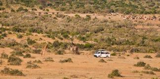 De bestelwagen van de toerist in Masai Mara Royalty-vrije Stock Afbeeldingen