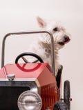 De Bestuurder van de zondag - de drijfauto van de Hond Stock Fotografie