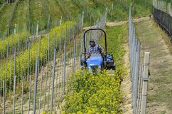 De de bestuurderswerken van de kruippakjetractor onder de rijen van wijngaarden Royalty-vrije Stock Foto's