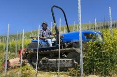 De de bestuurderswerken van de kruippakjetractor onder de rijen van wijngaarden Stock Afbeeldingen