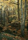 De beuk en de steen van de herfst royalty-vrije stock afbeeldingen