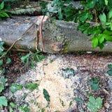De beuk opent het bos het programma Stock Afbeelding