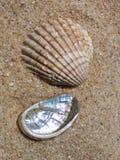 De bevindingen van het strand Stock Foto's