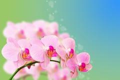De bevlekte bloemen van de pastelkleurorchidee op gradiënt Royalty-vrije Stock Foto's