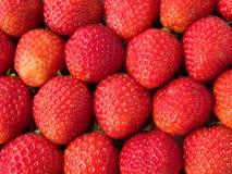 De bevolen doos van aardbeien rij Stock Afbeelding