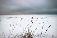 De bevroren kust van de Golf van sneeuw duidelijk en droog riet onder een zware hemelachtergrond stock fotografie