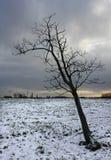 De bevroren leafless sneeuw van de boomwinter Stock Foto's