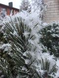 De bevroren naalden van het de winter koude ijs royalty-vrije stock afbeeldingen
