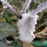 De bevroren veer Stock Foto's