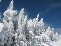 De bevroren Winter I Stock Afbeeldingen