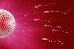 De Bevruchting van het sperma en van het ei Stock Afbeeldingen