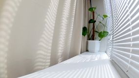 De bewegende stralen van de zon door de zonneblinden op het venster op een de zomerdag op een vensterbank met een monster bloeien stock video