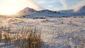 De bewegende winter van de grassneeuw stock video