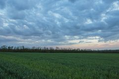 De beweging van de onweerswolken over de gebieden van de winterwhea royalty-vrije stock afbeelding