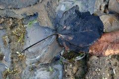 De beweging veroorzakende winter, blad van een boom in het ijs Stock Foto