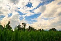 De bewolkte hemel van het padiegebied stock afbeelding