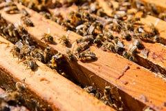 De bezige bijen, sluiten omhoog mening van de het werk bijen op honingraat Stock Foto's