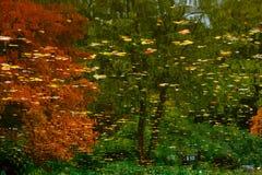 De bezinning van bomen in water Stock Afbeelding