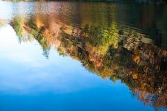 De Bezinning van de Bomen van de herfst Stock Afbeelding