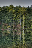 De Bezinning van de boom Stock Foto