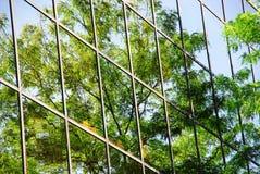 De bezinning van de boom Stock Foto's