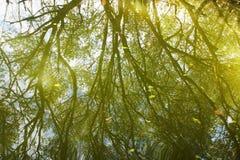 De bezinning van de boom over het meer Stock Afbeelding