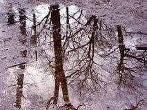 De bezinning van de boom in vulklei Stock Fotografie