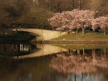 De Bezinning van de brug royalty-vrije stock afbeeldingen