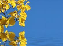 De Bezinning van de herfst Stock Foto's