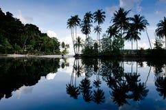 De bezinning van de kokospalm Royalty-vrije Stock Foto's