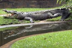 De Bezinning van de krokodil Stock Fotografie