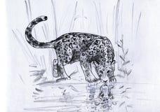 De bezinning van de luipaard Stock Foto