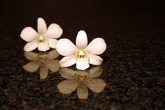 De bezinning van de orchidee Stock Foto