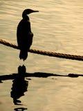 De bezinning van de vogel Royalty-vrije Stock Afbeelding