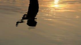 De bezinning van een Jonge Mens wordt gezien in Meerwateren bij een Schitterende Zonsondergang stock footage