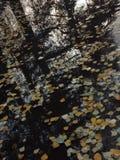 De bezinning van de herfstbladeren in een vulklei Stock Foto's