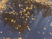 De bezinning van de herfstbladeren in een vulklei Stock Afbeelding