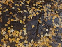De bezinning van de herfstbladeren in een vulklei Royalty-vrije Stock Fotografie