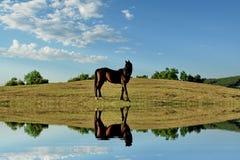 De bezinning van het paard Royalty-vrije Stock Foto